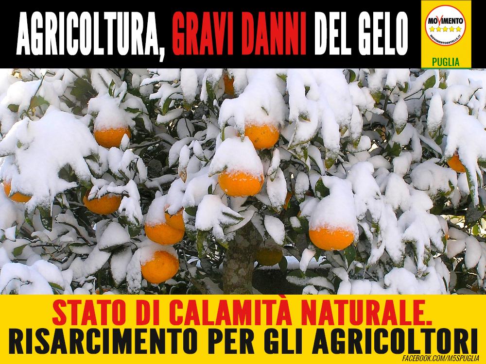 Agricoltura_neve-calamità_naturale_puglia