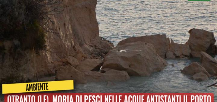 Otranto (LE), moria di pesci nelle acque antistanti il porto. Trevisi: Controllare lo stato di inquinamento delle acque - M5S notizie m5stelle.com