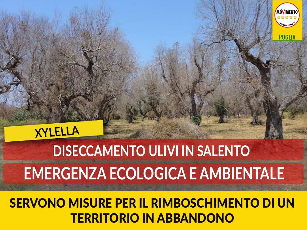 """Disseccamento ulivi in Salento. Casili: """"Emergenza ecologica e ambientale. Servono misure per il rimboschimento"""""""