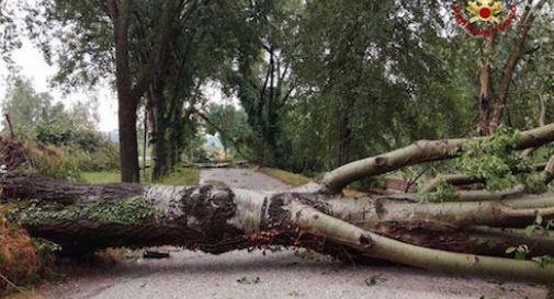 Maltempo in Salento. Casili : Monitoraggio necessario per prevenire la caduta degli alberi