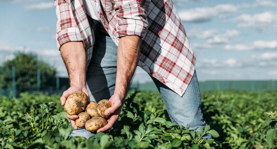 """M5S: """"In 5 Regioni emanate ordinanze per consentire agli hobbisti di coltivare per il sostentamento familiare. Che aspetta la Puglia?"""""""