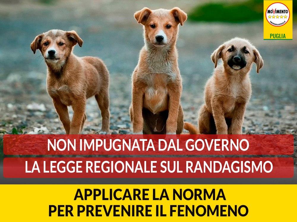 """Non impugnata dal Governo la legge regionale sul randagismo. Bozzetti (M5S): """"Ora è necessario che la norma diventi operativa"""""""