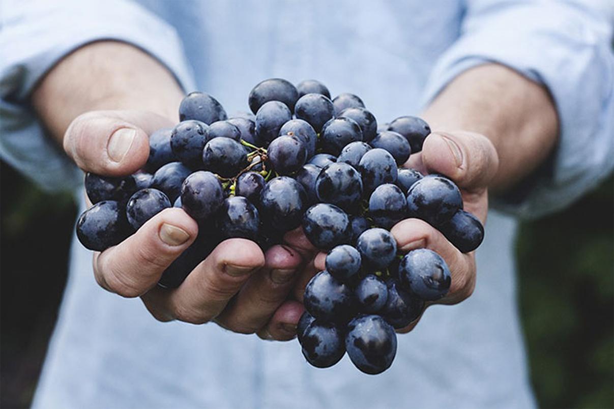 Primitivo. M5S: Blindare i nostri vitigni. Convocare comitato vitivinicolo e investire sul marketing per aiutare i nostri produttori