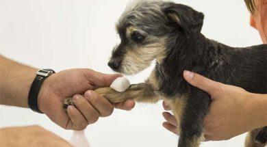 Visita cane – Ca' Zampa copia_0