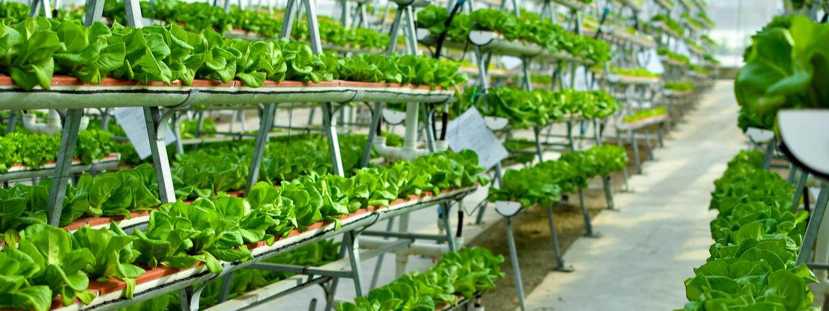 Agricoltura. Trevisi (M5S) presenta mozione per il sostegno regionale alle attività di coltivazione idroponica e acquaponica