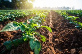 agricoltura1-1024×683