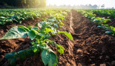 agricoltura1-1024x683
