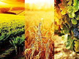 mostra-agricoltura-faenza